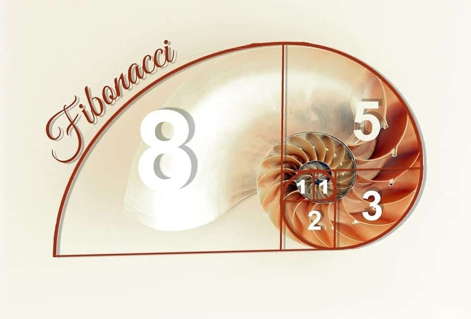 Fibonacci Sea Shell